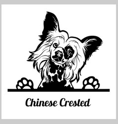Dog head chinese crested breed black and white vector