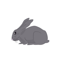 Hare sits vector