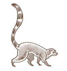 Lemur isolated sketch african madagascar animal vector