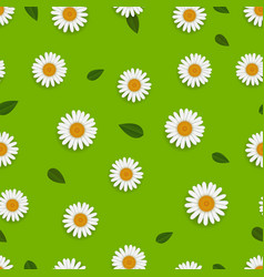 Spring seamless pattern with white camomiles vector
