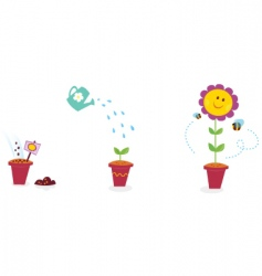 garden flower growth stages sunflower vector image vector image