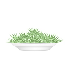 Small Palm Trees in A Flower Pot vector image vector image