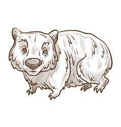 australian animal wombat isolated sketch fauna vector image