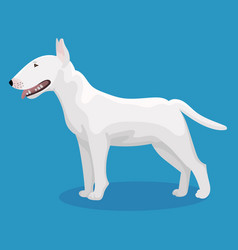 Bull terrier dog vector