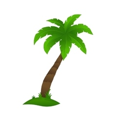 Palm tree on a white background vector image