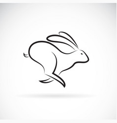 rabbit is running on white background wild vector image