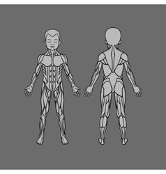 Anatomy of children muscular system exercise and vector image vector image