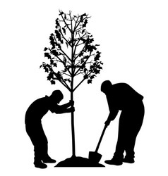 two men planting a tree vector image vector image