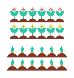 Flower blooming plants carrot vector