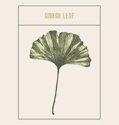 Ginkgo leaf drawn sketch vector