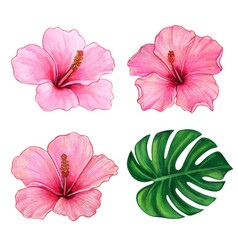 watercolor colorful hand drawn hibiscus flower vector image