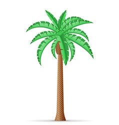 palm tree 20 vector image vector image