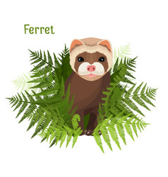 ferret in green leaves of fern polecat cute vector image