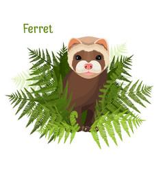 Ferret in green leaves of fern polecat cute vector