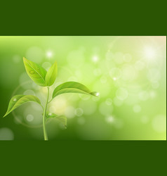 Growing sprout on green background vector