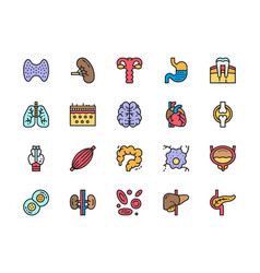 Set human organs flat color icons spleen vector