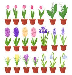 Spring flowers in flower pots irises lilies vector