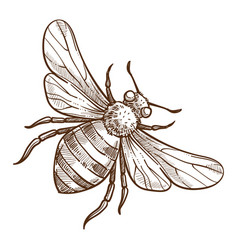 stinging insect bee isolated sketch striped bug vector image