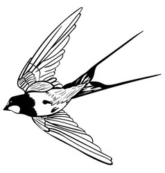 silhouette flying swallows vector image vector image