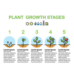 plant growth stages infographics line art icons vector image vector image