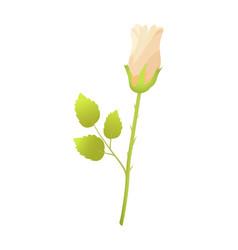 beige rose flower closed bud bossom green leaves vector image