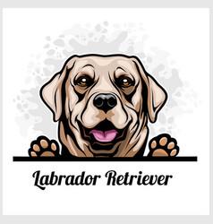 color dog head labrador retriever breed on white vector image