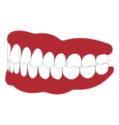 Dentures with white teeth vector