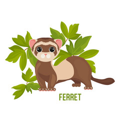 ferret animal with wide open eyes in green leaves vector image