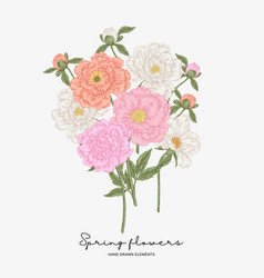 pink and white peonies bouquet spring flowers vector image