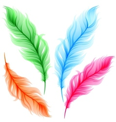 Set of colorful transparent feathers vector