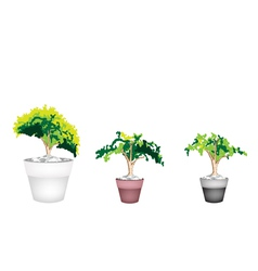 Three Evergreen Plant in Terracotta Flower Pot vector