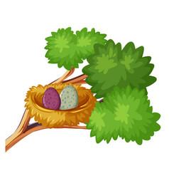two bird eggs in nest vector image