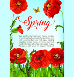 Spring time greeting card of poppy flowers vector