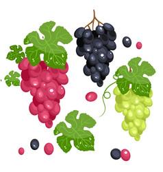 photo realistic grape set full editable isolated vector image vector image