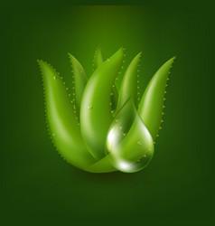 Aloe vera plant vector