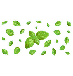 basil leaves horizontal background vector image