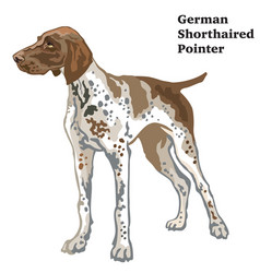 Colored decorative standing portrait of german vector