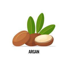 Fresh argan seeds icon tasty ripe nuts isolated vector