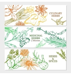 Natural Healthy Plants Horizontal Banners vector