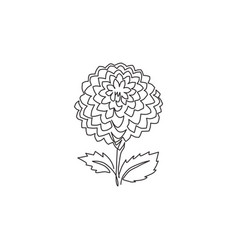 one continuous line drawing beauty fresh dahlia vector image