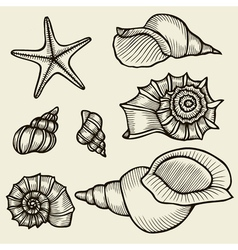 Seashells hand drawn set vector image