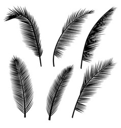 set of palm leaves silhouettes vector image