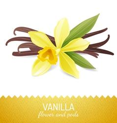 vanilla icon vector image vector image