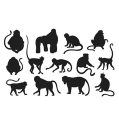 Monkeys silhouette hanging and jumping black apes vector