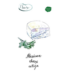 Piece of mexican cotija cheese with cilantro vector