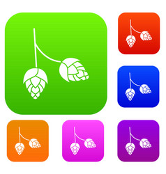 Branch of hops set collection vector