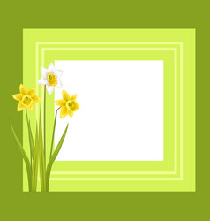 greeting card with framing daffodil narcissus vector image