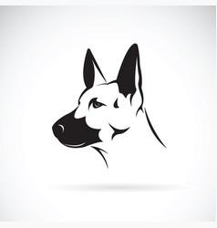 dog head german shepherd on white background vector image