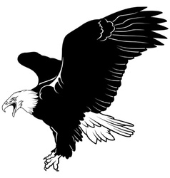 Flying Bald Eagle vector image