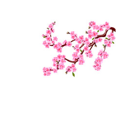 Sakura cherry flowers with buds and leaves on a vector